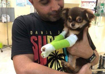 """""""พระของสัตว์พิการ"""" แค่ชื่อก็เดาได้แล้วว่าเรื่องราวน่าประทับใจที่ไทยซิกข์อาสานำมาแบ่งปันให้ทุกคนได้อ่านในวันนี้เป็นเรื่องเกี่ยวกับอะไร ใช่แล้วครับ เรื่องนี้เป็นเรื่องของคนรักสัตว์คนหนึ่งที่ทุ่มเท เพื่อช่วยให้สัตว์พิการกลับมาเดินได้อีกครั้ง"""
